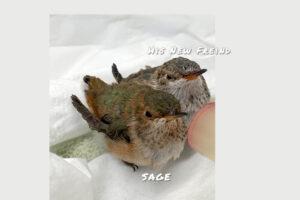 sage-new-freind